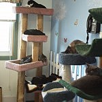 Resident cats napping at the Stevens-Swan Humane Society