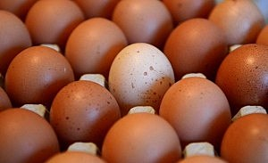 NYS Seeing Increase In Egg Production
