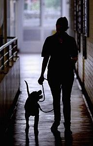 Animal Abuse Court Case