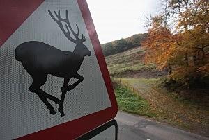 Police Make Illegal Hunting Arrest