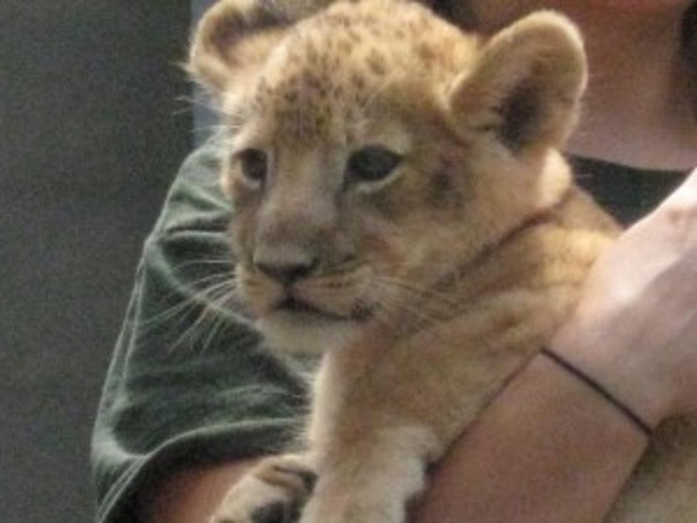 Lion King Baby Names Simba Nala Timon