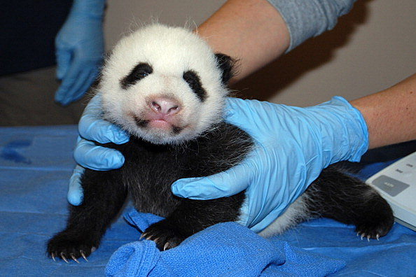 National Zoo's Panda needs a name