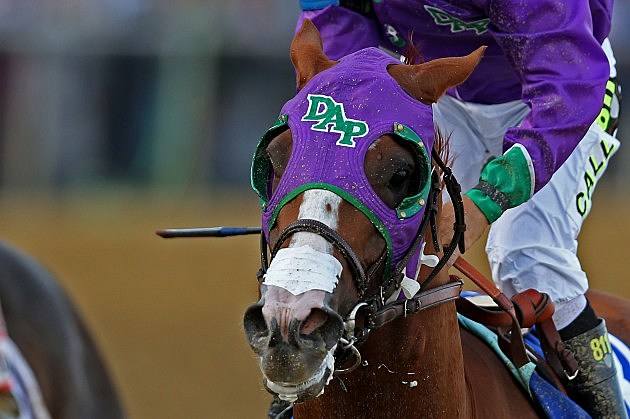 FILE: California Chrome Cleared To Wear Nasal Strip In Belmont Stakes